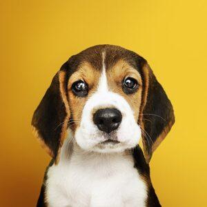 accesorios, veterinaria, comida, mascotas lima